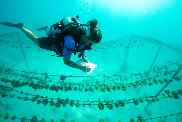 Coral colonies of hope: Gili Lankanfushi leads in coral preservation