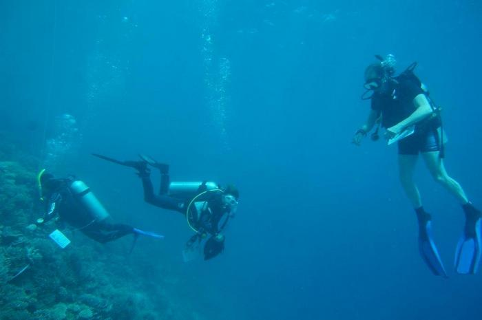 Biosphere Expeditions offers chance to win reef conservation trip to Maldives