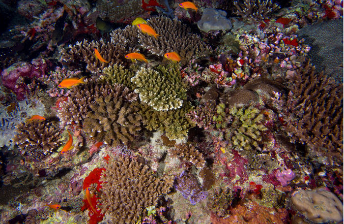 Major study shows resilience of Maldives reefs