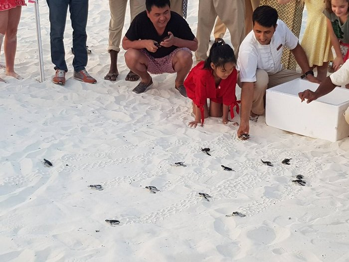 First turtle hatchlings of 2018 at Dusit Thani Maldives