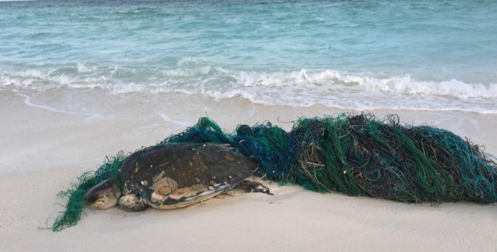 Soneva Jani partners with Olive Ridley Project